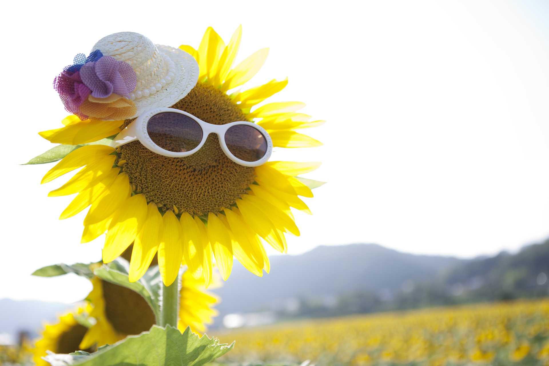 人生では、明るい方向へ顔を向ける人が明るくなれる。 | 人生を明るく生きる30の方法